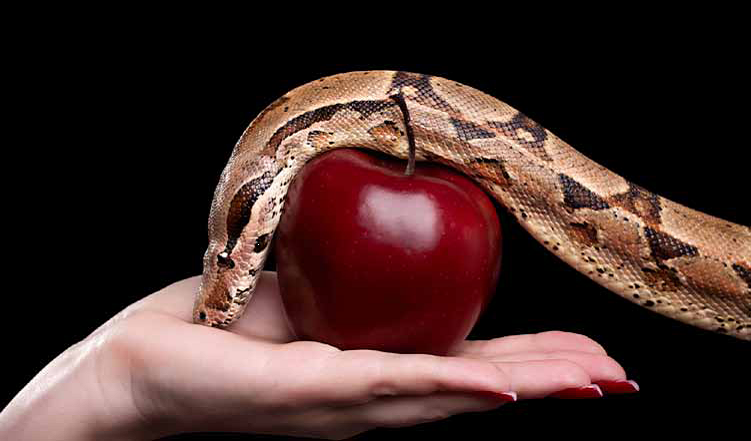 Eve/'s neck and snake